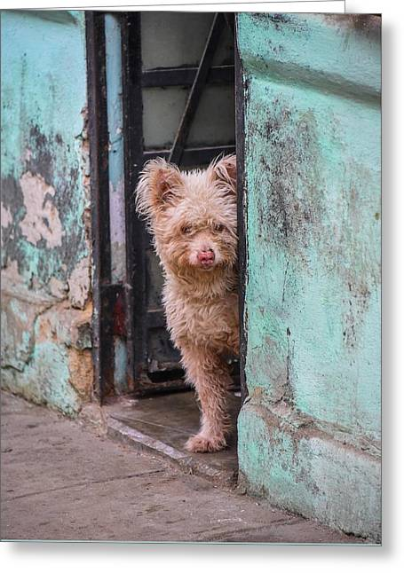 Greeting Card featuring the photograph Dogs Of Cuba - 2 by Rand