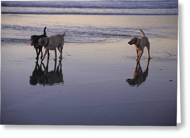 Dogs Play At The Beach Greeting Card