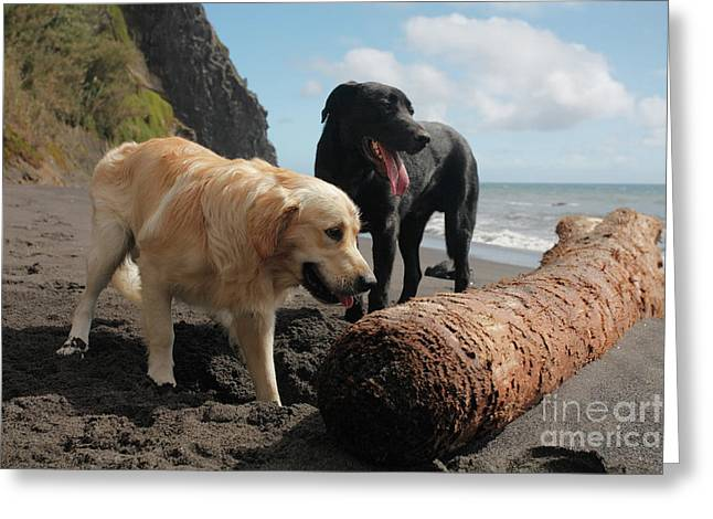 Dogs Playing At The Beach Greeting Card by Gaspar Avila