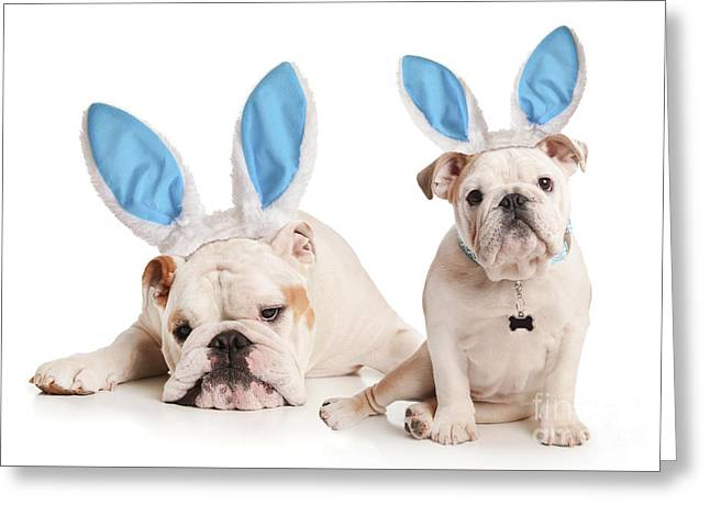 Dogs Playing Bunny Greeting Card