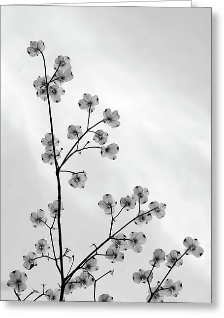 Dogwood Against The Sky Greeting Card by Andy Puttbach