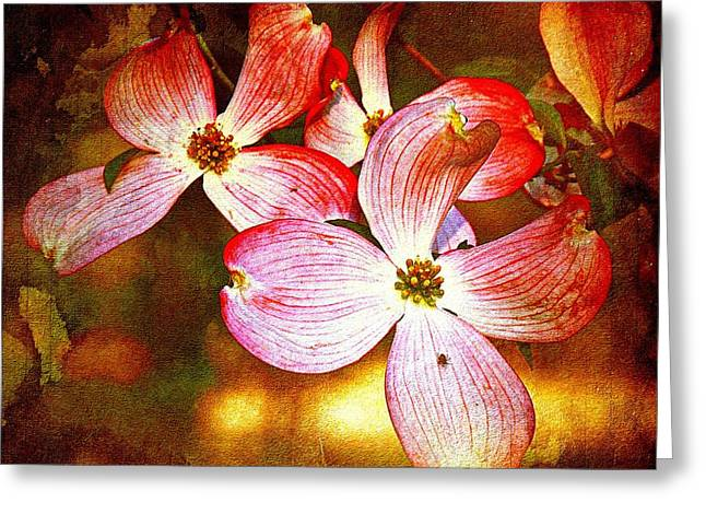 Dogwood Greeting Card by Allen Beilschmidt