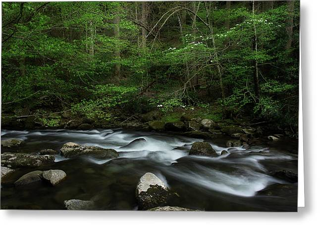 Greeting Card featuring the photograph Dogwood Along The River by Mike Eingle
