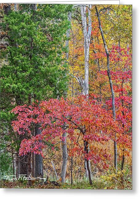 Dogwood And Cedar Greeting Card by Tim Fitzharris