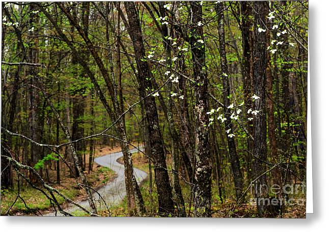 Dogwood And Country Road Greeting Card