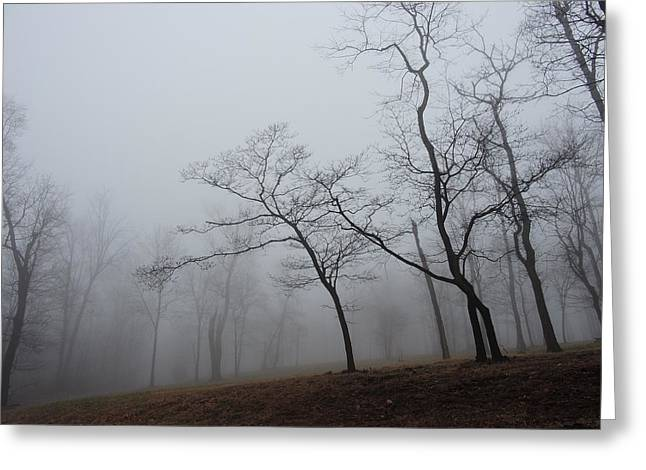 Dogwood And Persimmons In The Mist Greeting Card by Jamie K Reaser