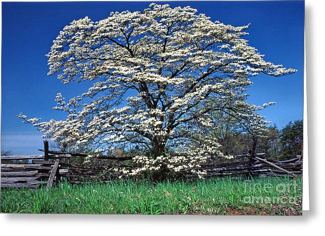 Dogwood And Rail Fence Greeting Card by Thomas R Fletcher