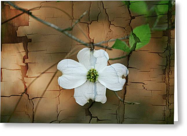 Dogwood Bloom Greeting Card by Cathy Harper