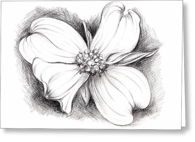 Dogwood Blossom Charcoal Greeting Card