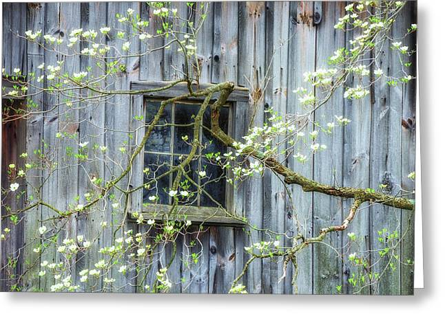 Dogwood Blossoms- Rejuvination  Greeting Card by Thomas Schoeller