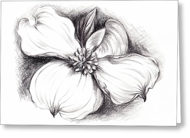 Dogwood Flower In Charcoal Greeting Card