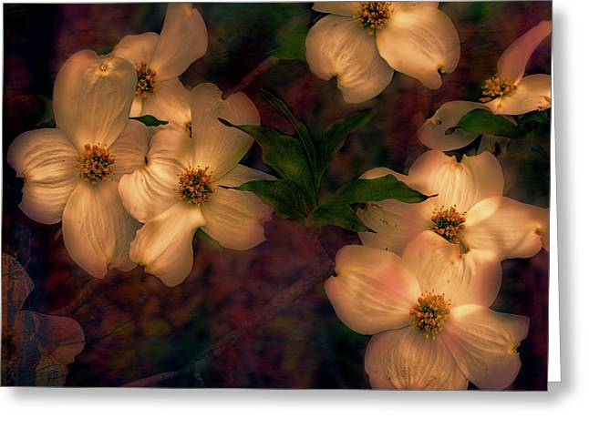 Dogwood Flowers Alight Greeting Card by Bellesouth Studio