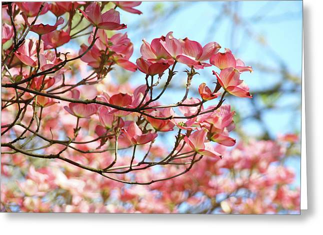 Dogwood Tree Landscape Pink Dogwood Flowers Art Greeting Card by Baslee Troutman
