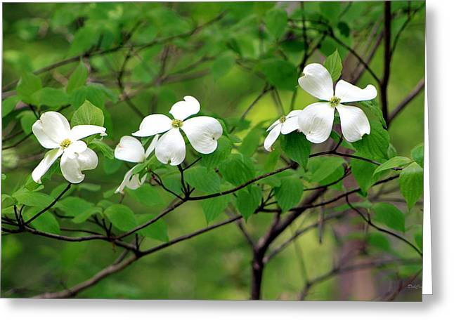 Dogwoods Greeting Card