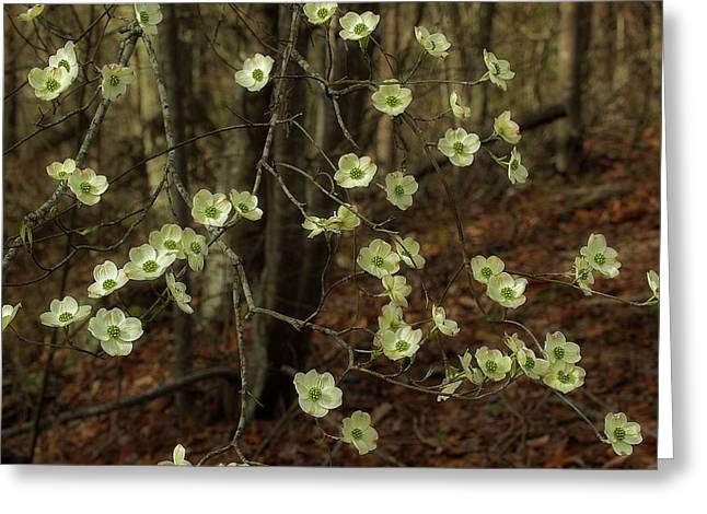 Greeting Card featuring the photograph Dogwoods In The Spring by Mike Eingle