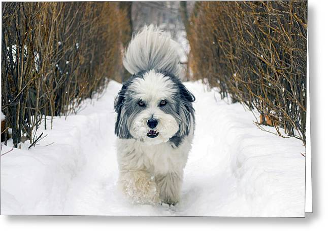 Doing The Dog Walk Greeting Card by Keith Armstrong