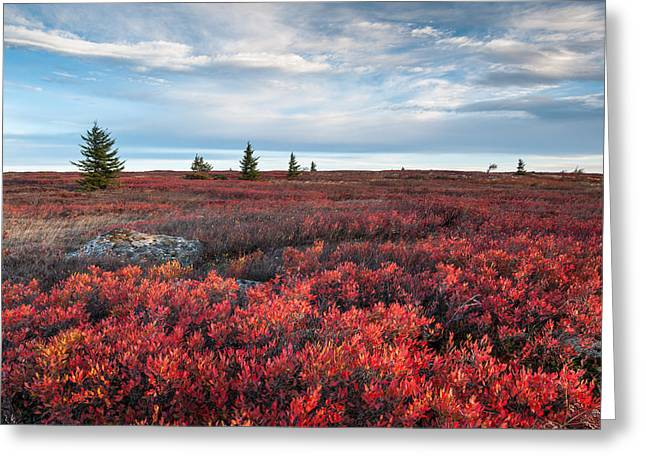 Dolly Sods Wilderness Area West Virginia Autumn Scenic Greeting Card by Mark VanDyke