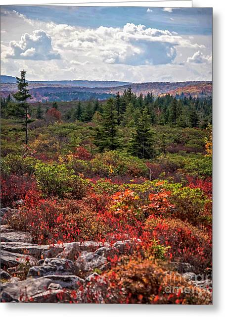 Dolly Sods Wilderness In Autumn 4273 Greeting Card
