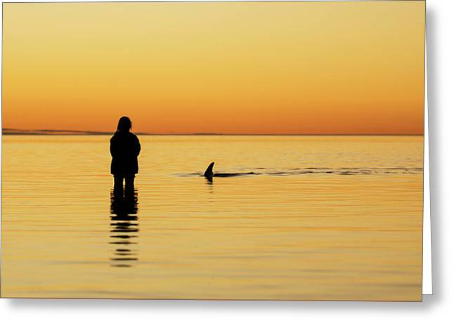 Dolphin And Girl Greeting Card by Gary Wright