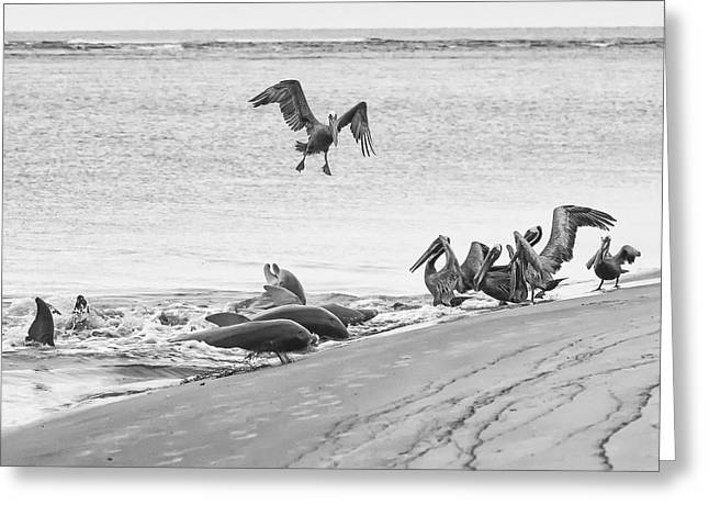 Dolphin And Pelican Party Greeting Card