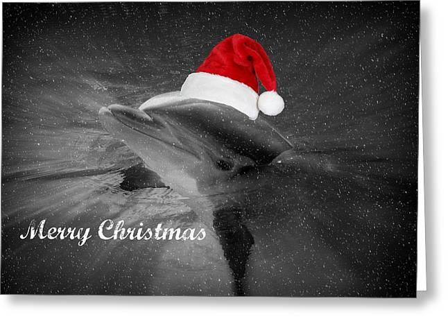 Dolphin Christmas Greeting Card