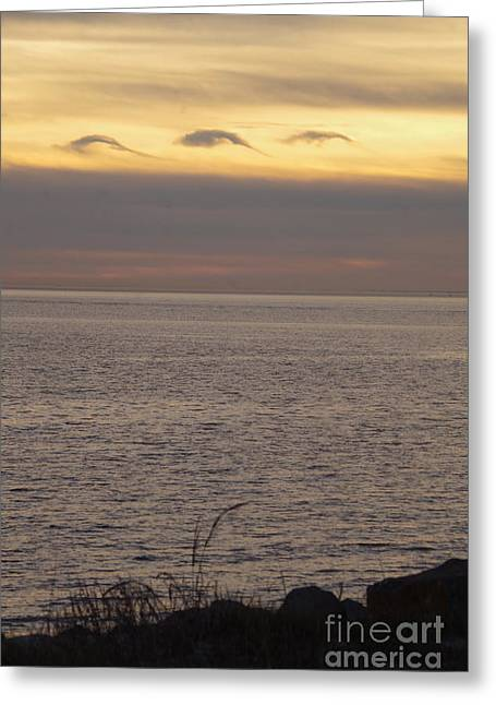 Dolphin Cloud Sunset Greeting Card by Tannis Baldwin