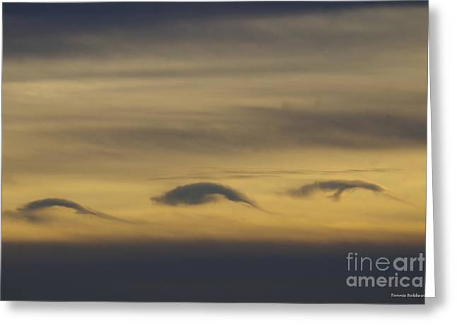 Dolphin Clouds Greeting Card by Tannis Baldwin