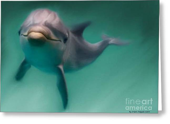 Dolphin  Greeting Card by Crispin  Delgado