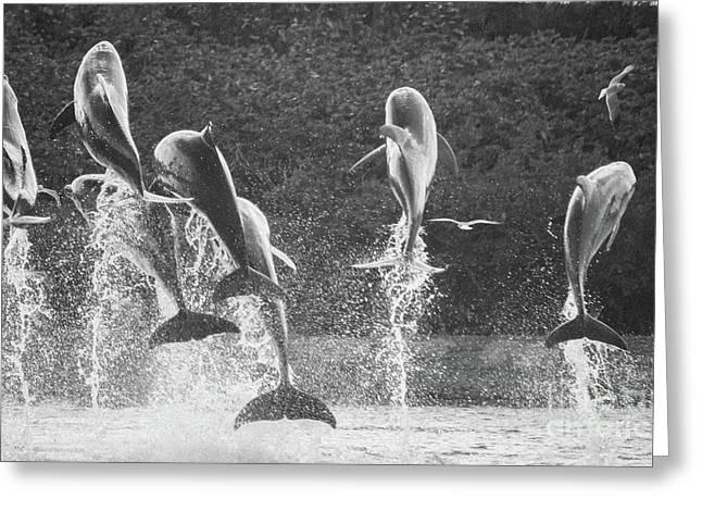 Dolphin Dance Greeting Card by Wilko Van de Kamp