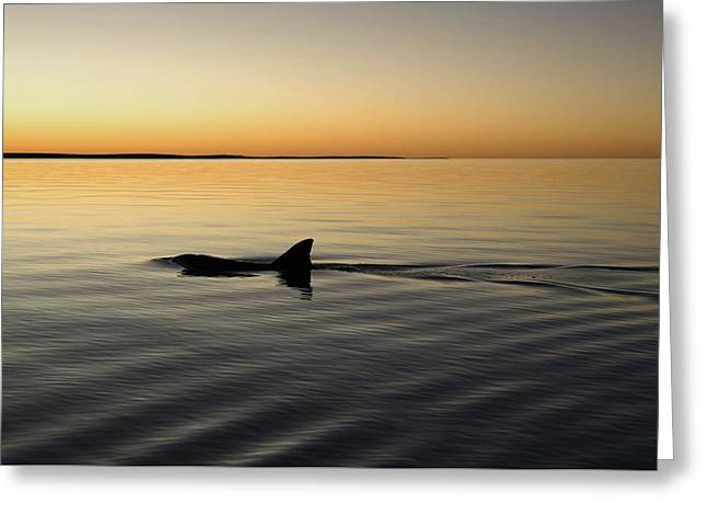 Dolphin Greeting Card by Gary Wright