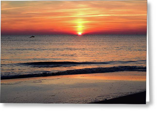 Dolphin Jumping In The Sunrise Greeting Card