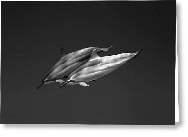 Dolphin Pair Greeting Card by Sean Davey