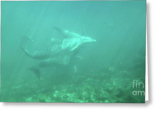 Greeting Card featuring the photograph Dolphin Swim by Francesca Mackenney
