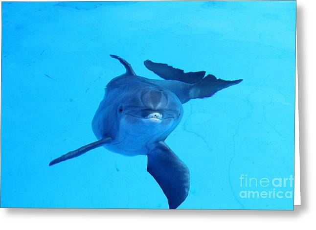 Dolphin Underwater Greeting Card