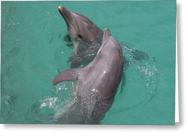 Dolphins Two Greeting Card by Gwen Vann-Horn