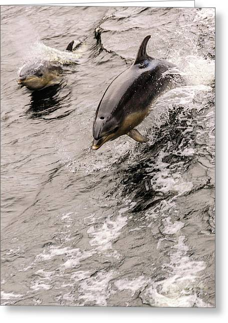 Dolphins Greeting Card by Werner Padarin