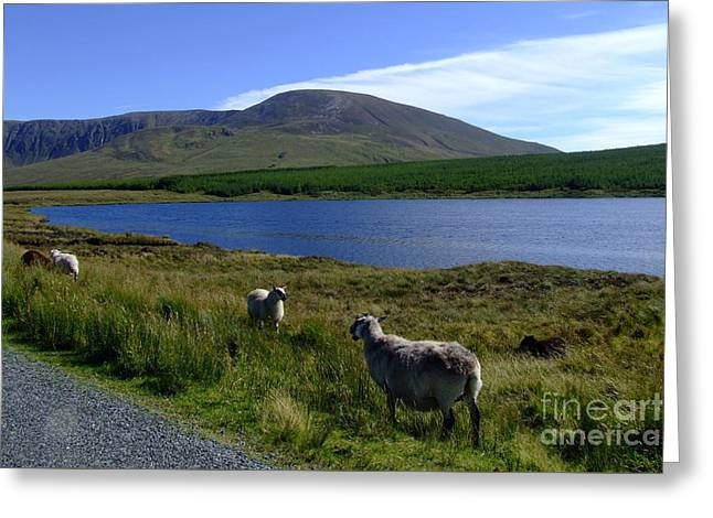 Donegal Landscape Greeting Card by Joe Cashin