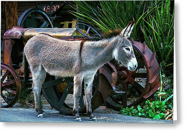 Donkey And Old Tractor Greeting Card by Garry Gay