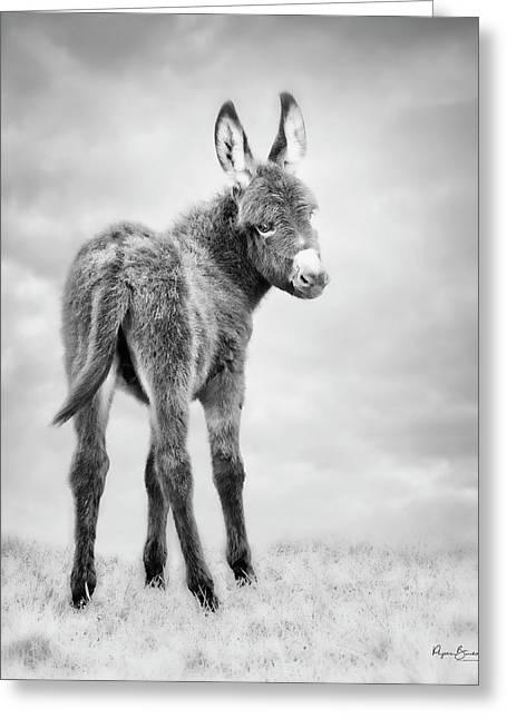 Donkey Days Greeting Card