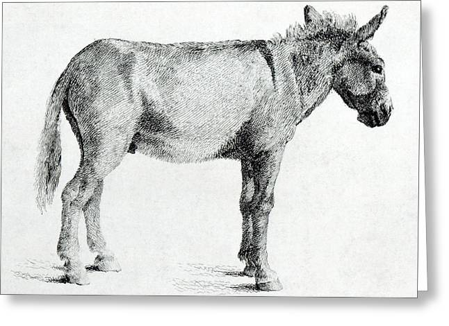 Donkey Greeting Card by George Stubbs