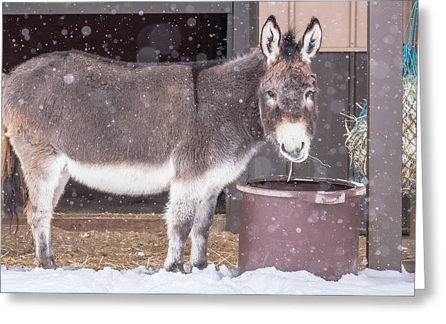Donkey Watching It Snow Greeting Card