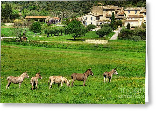 Donkeys In Provence Greeting Card