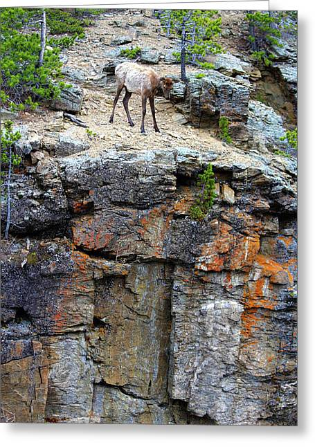 Greeting Card featuring the photograph Don't Jump by Shane Bechler