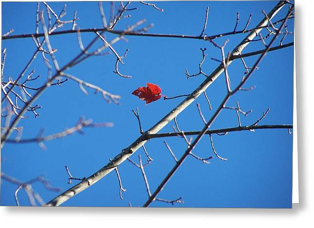 Don't Leaf Me-southern Maine Greeting Card by Jennifer Bowring
