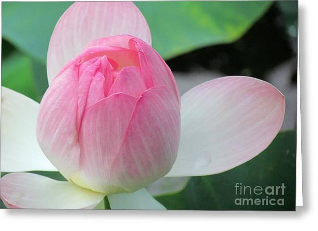 Dotus On The Lotus  Greeting Card