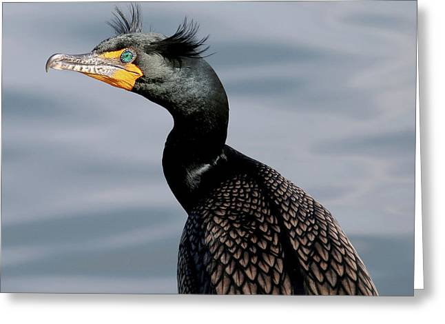 Double-crested Cormorant Closeup Greeting Card