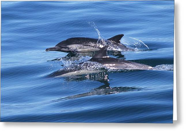 Double Dolphins And Reflections Greeting Card