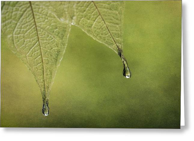 Double Drip Greeting Card by Maggie Terlecki