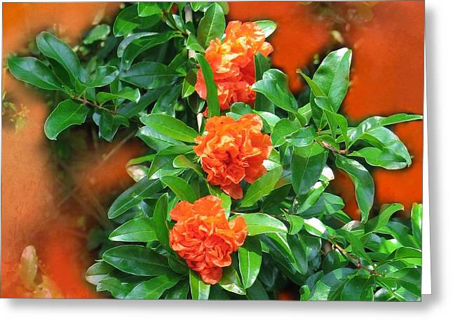 Double Flowering Pomegranate Greeting Card