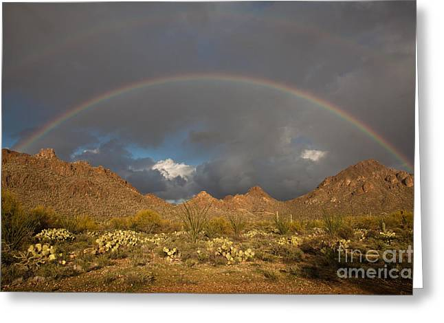 Double Rainbow Greeting Cards - Double Rainbow Tucson Arizona Greeting Card by Louis Amore